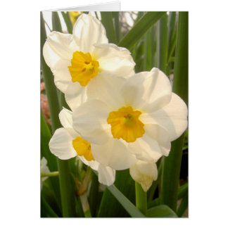 Carte Narcisses de ressort