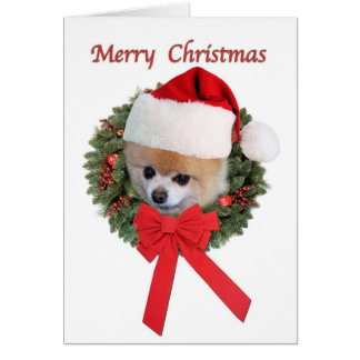 Carte Noël, chien de Pomeranian, casquette de Père Noël