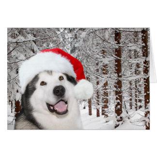 Carte Noël de Malamute d'Alaska