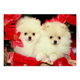 Carte Noël Pomeranians