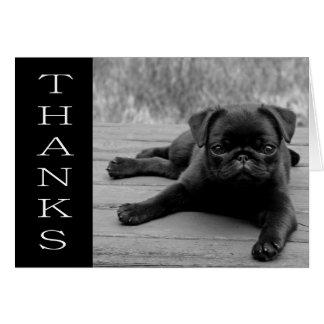 Carte noire et blanche de chiot de carlin de Merci