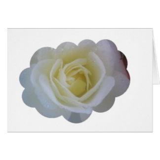 Carte Nuage de rose blanc