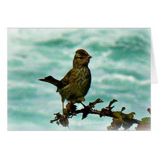 Carte Oiseau de Rockport