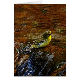 Carte Oiseau jaune canari jaune se baignant