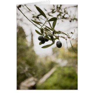 Carte Olive