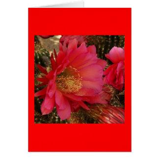 Carte orange magenta de fleur de cactus