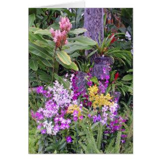 Carte Orchidées et gingembre