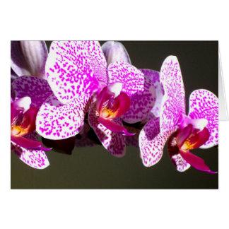 Carte Orchidées roses