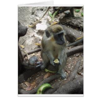 Carte Orteils de singe