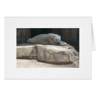 Carte Ours blanc au zoo et à l'aquarium de Pittsburgh