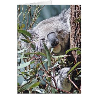 Carte Ours de koala