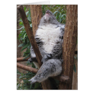 Carte Ours de koala de sommeil