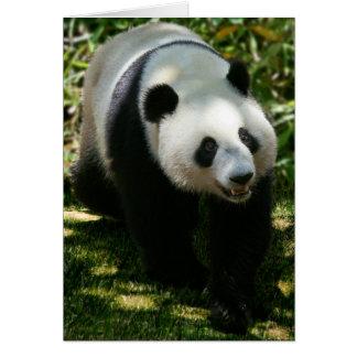 Carte Ours panda