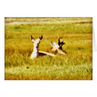 Carte Paires d'antilope