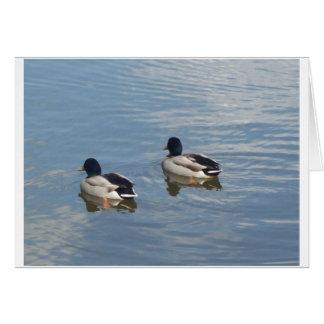 Carte paires de canard