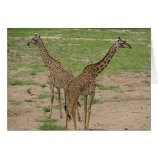 Carte Paires de girafes
