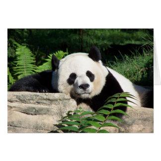 Carte Panda géant faisant une sieste