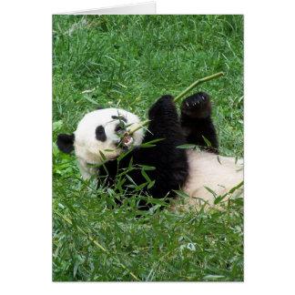 Carte Panda géant Lounging mangeant le bambou