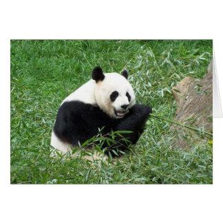 Carte Panda géant mangeant le bambou