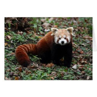 Carte Panda rouge