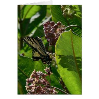 Carte Papillon de machaon sur des fleurs de Milkweed