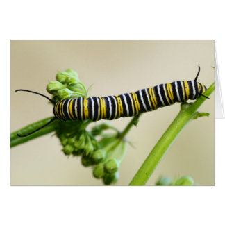 Carte Papillon de monarque Caterpillar alimentant sur le