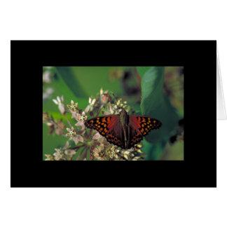 Carte Papillon d'empereur fauve sur le Milkweed commun