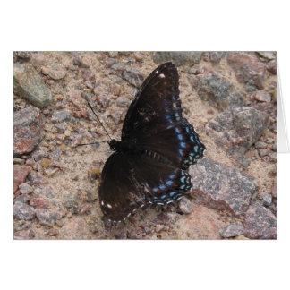 Carte Papillon sur une route rocheuse