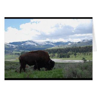 Carte Pâturage de Buffalo