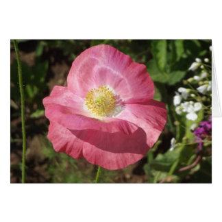 Carte Pavot rose