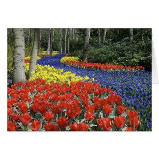 Carte Pays-Bas, Hollande, Lisse, jardins de Keukenhof