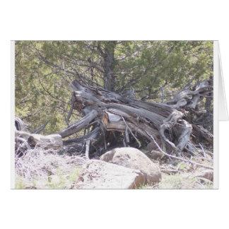 Carte Pêle-mêle de bois vieillissant