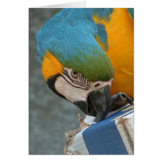 Carte Perroquet grignotant