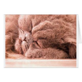Carte Persan endormi