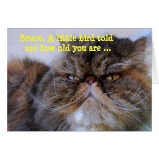 Carte Persan Kitty de calicot d'humour de joyeux