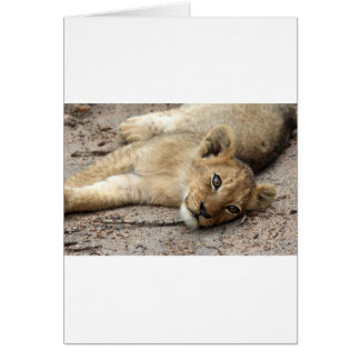 Carte Petit animal de Lazylion