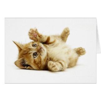 CARTE PETIT CAT