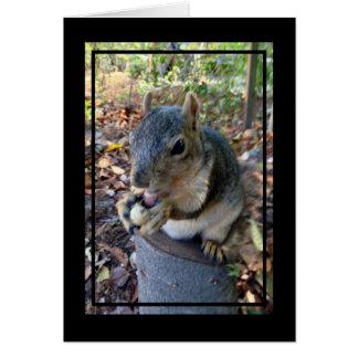Carte Petit écureuil mignon mangeant une arachide sur un
