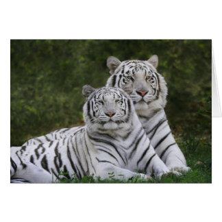 Carte Phase blanche, tigre de Bengale, Tigre