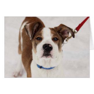 Carte photo de chien - Peyton