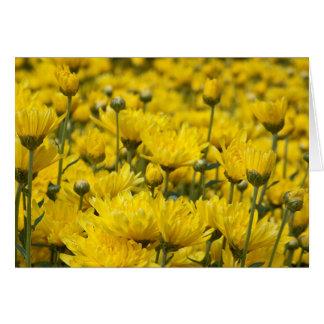 Carte Photo florale de beau chrysanthème d'automne