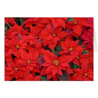 Carte Photo florale des poinsettias I de vacances rouges