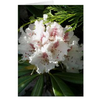 Carte Photo rose de rhododendron