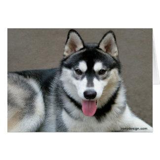 Carte Photographie de chien de Malamute d'Alaska