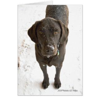 Carte Photographie de Labrador de chocolat arrosée par