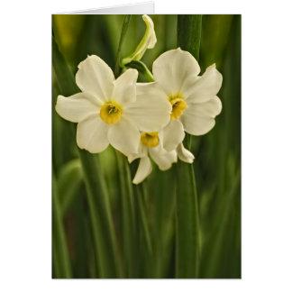 Carte Photographie florale :  Narcisse blanc de ressort