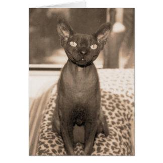 Carte Photographie vintage de chat de Devon Rex de style