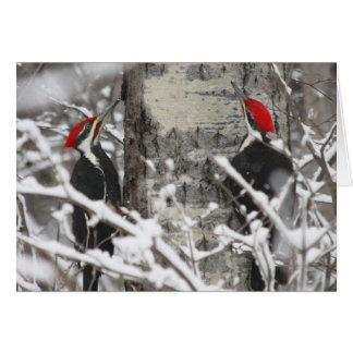 Carte Pivert en hiver