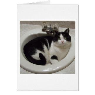 Carte Plaisir d'amoureux de les chats