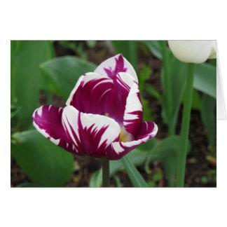 Carte Plaisir de tulipe